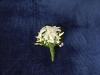 Amalfi Coast Wedding Flowers Galleries: Buttonholes